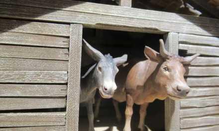Warum Ochs und Esel?